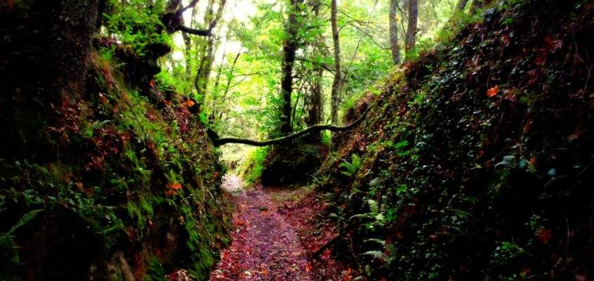 Ruta de A Broa